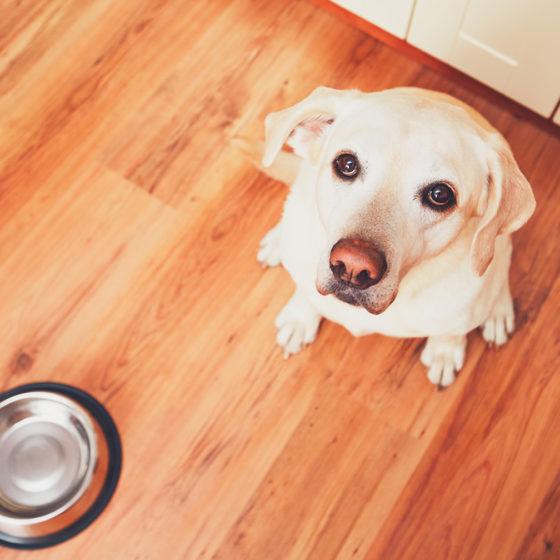 cosa possono mangiare i cani